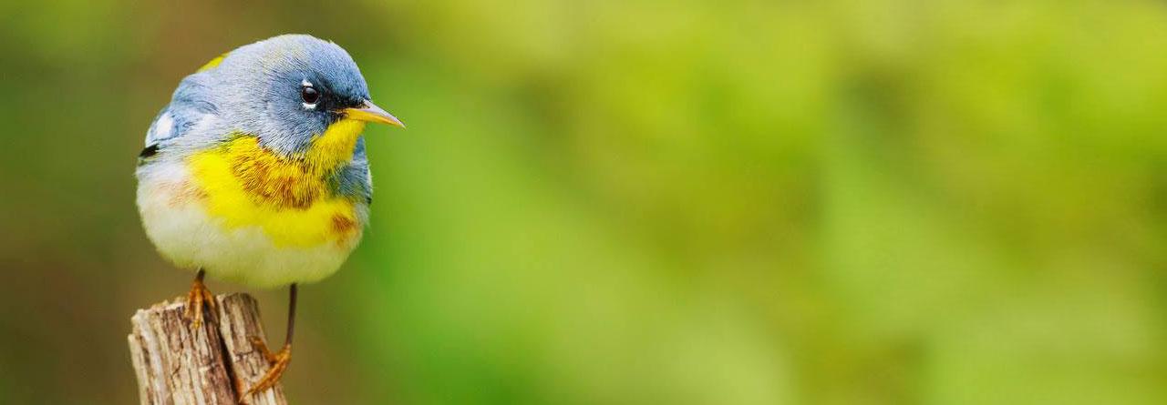 Birding at the Battlefield St. Bernard Parish Louisiana